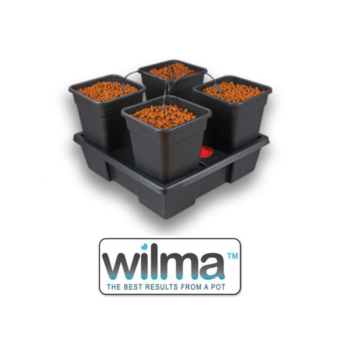 Four black pots filled with coco peat in black nursing tray.